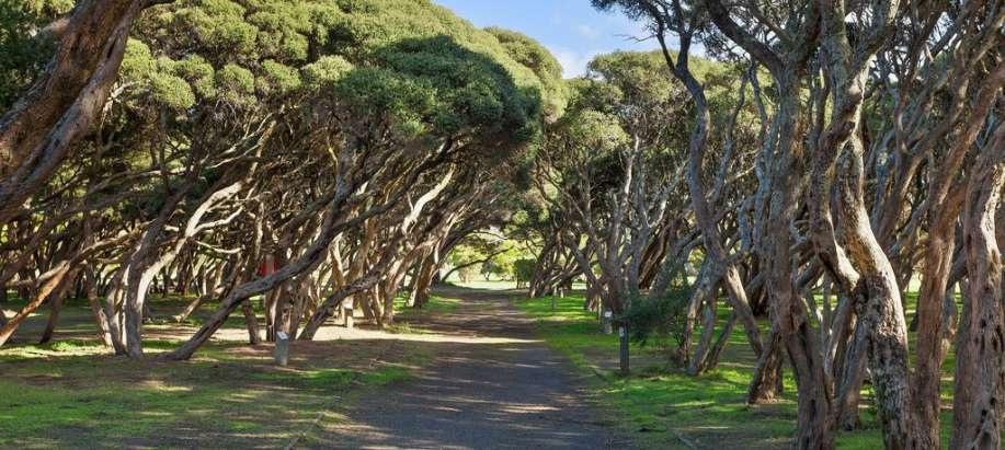 Anglesea Bush Camping Sites - No Dogs Allowed